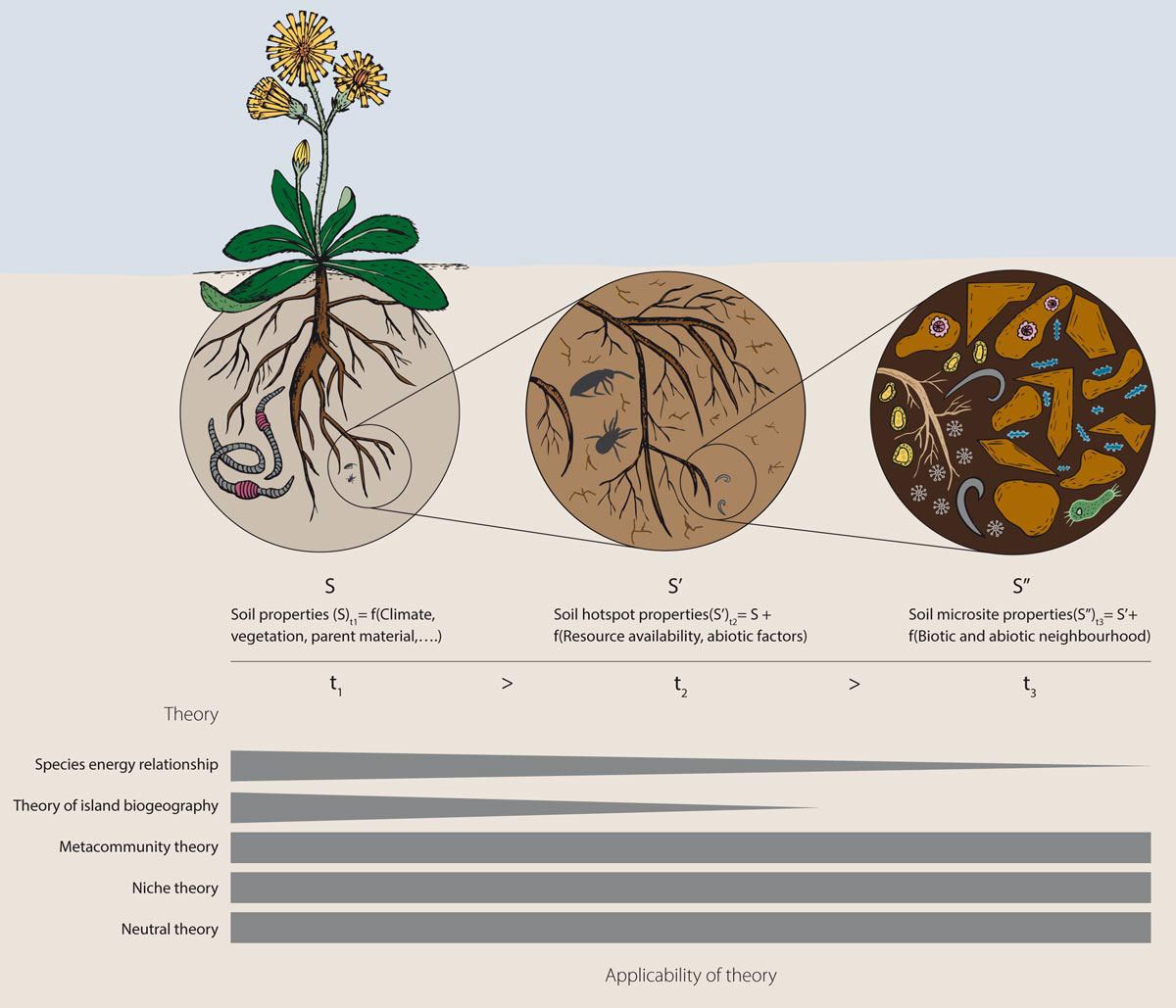 Infografic Root
